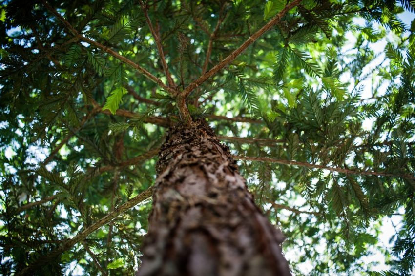 tree-1283721_1280