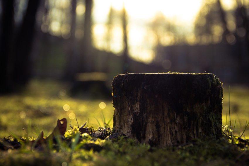 stump-933702_1280